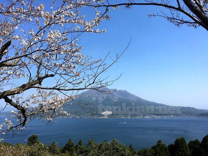 鹿児島の桜の名所、磯山公園