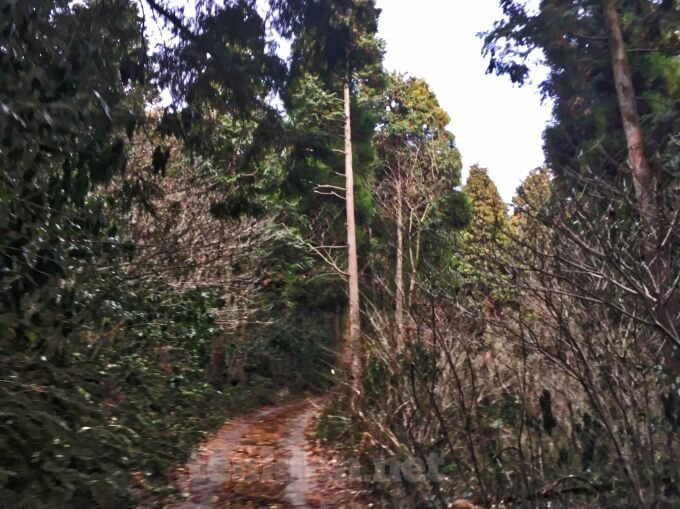 狐ヶ丘高原に行くには?険しい道を進まなくては行けない?