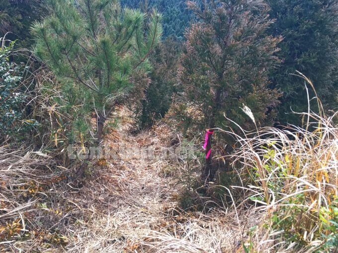 鹿児島の狐ヶ丘高原、溝のような道を滑り歩く