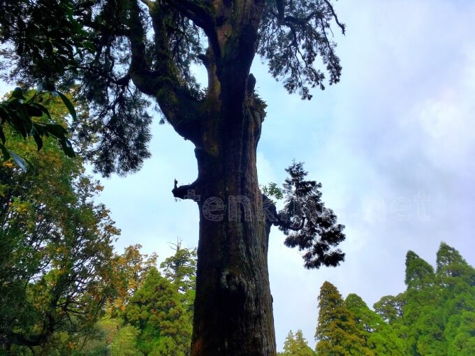 霧島神宮のパワースポットご神木に装束姿で参拝している人が!!