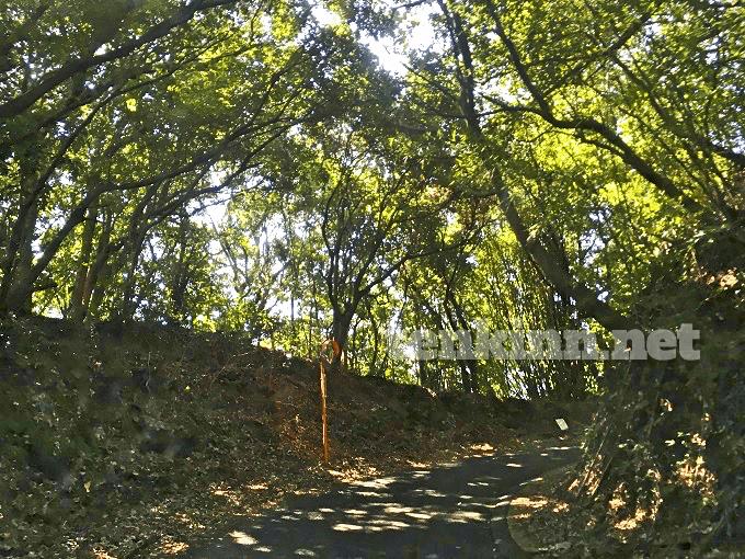西郷どんのロケ地、小牧の棚田に行く道は狭い