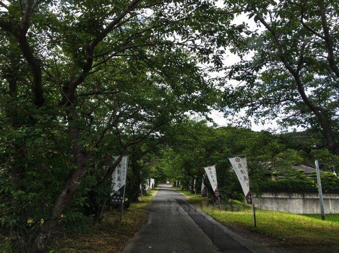 精矛神社のアクセス方法!道は狭い?
